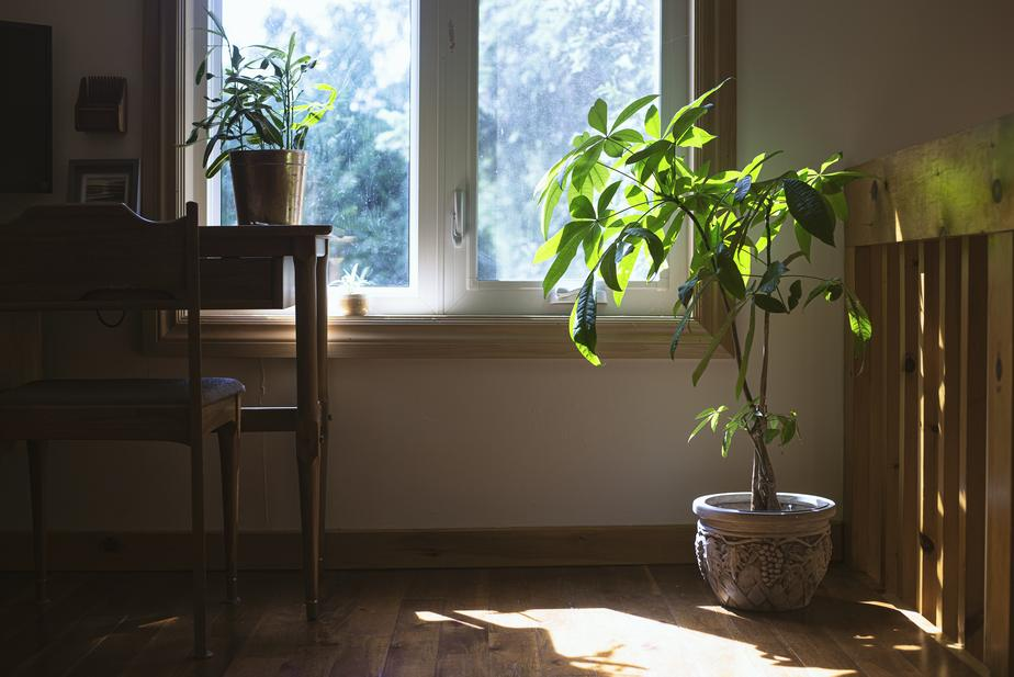 home office with plant
