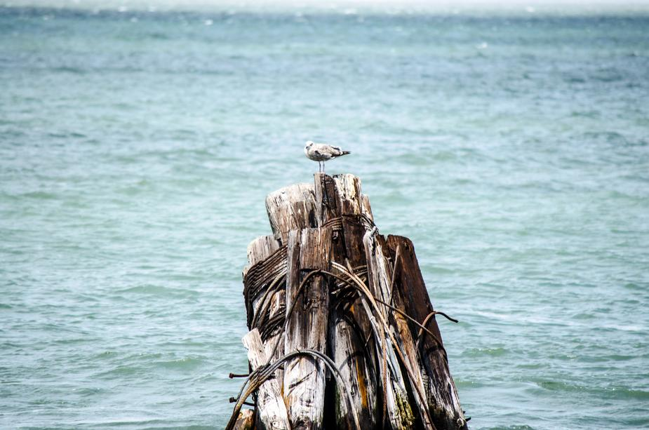 a bird on stack of wood in sea