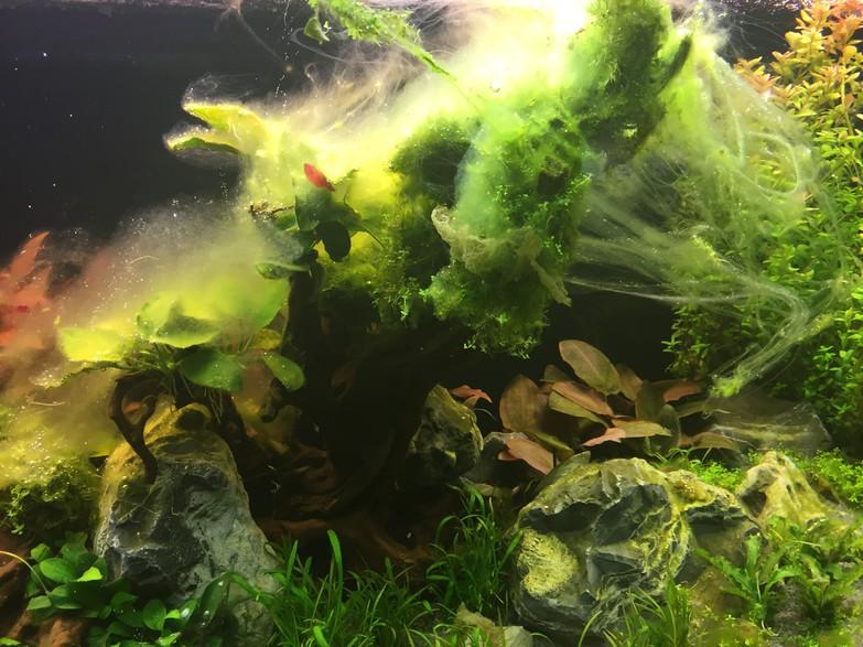 Wie du algen im aquarium vorbeugst teil ii for Algen im aquarium