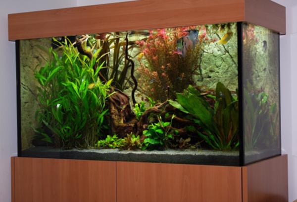 Aquarium guide wissen zum thema aquaristik for Aquarium heizen