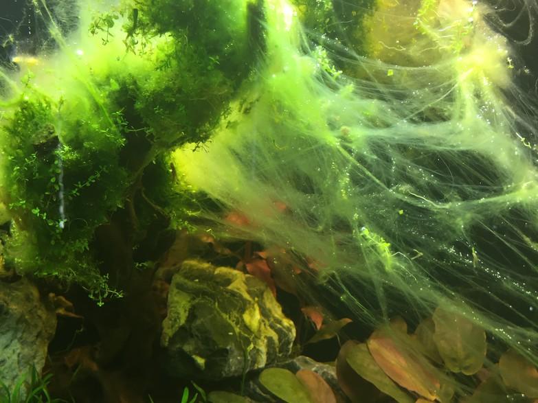 Wie du algen im aquarium vorbeugst teil i for Algen im aquarium