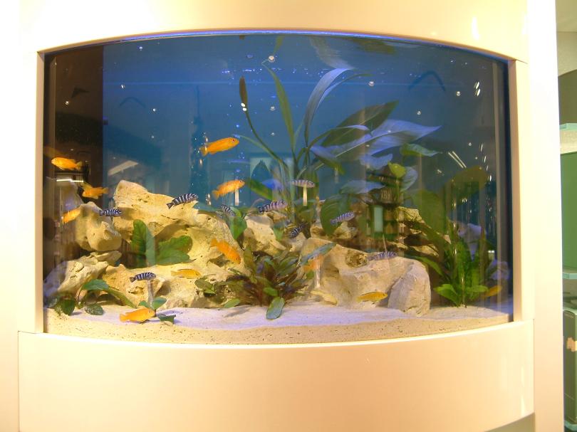 welche arten von aquarien gibt es. Black Bedroom Furniture Sets. Home Design Ideas