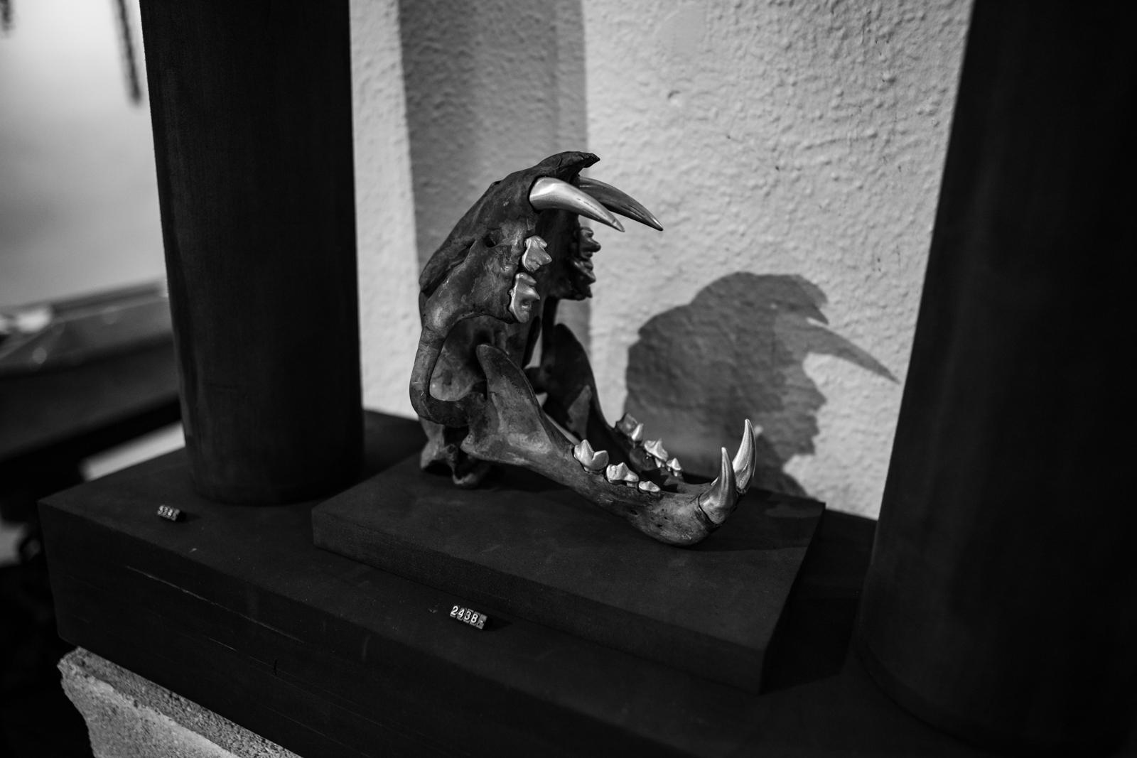 Parts of 4 Showroom Leopard Skull Animal Magic on Display FW20