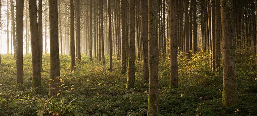 Différentes essences de bois composent  nos bûches compressées : chêne, charme, hêtre