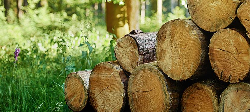 Livraison de bois bûche en Ile-de-France, dans le département de la seine et marne