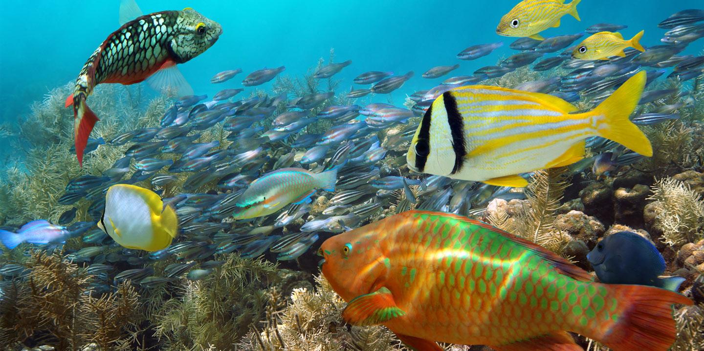 Närbild på massor av färgglada fiskar.