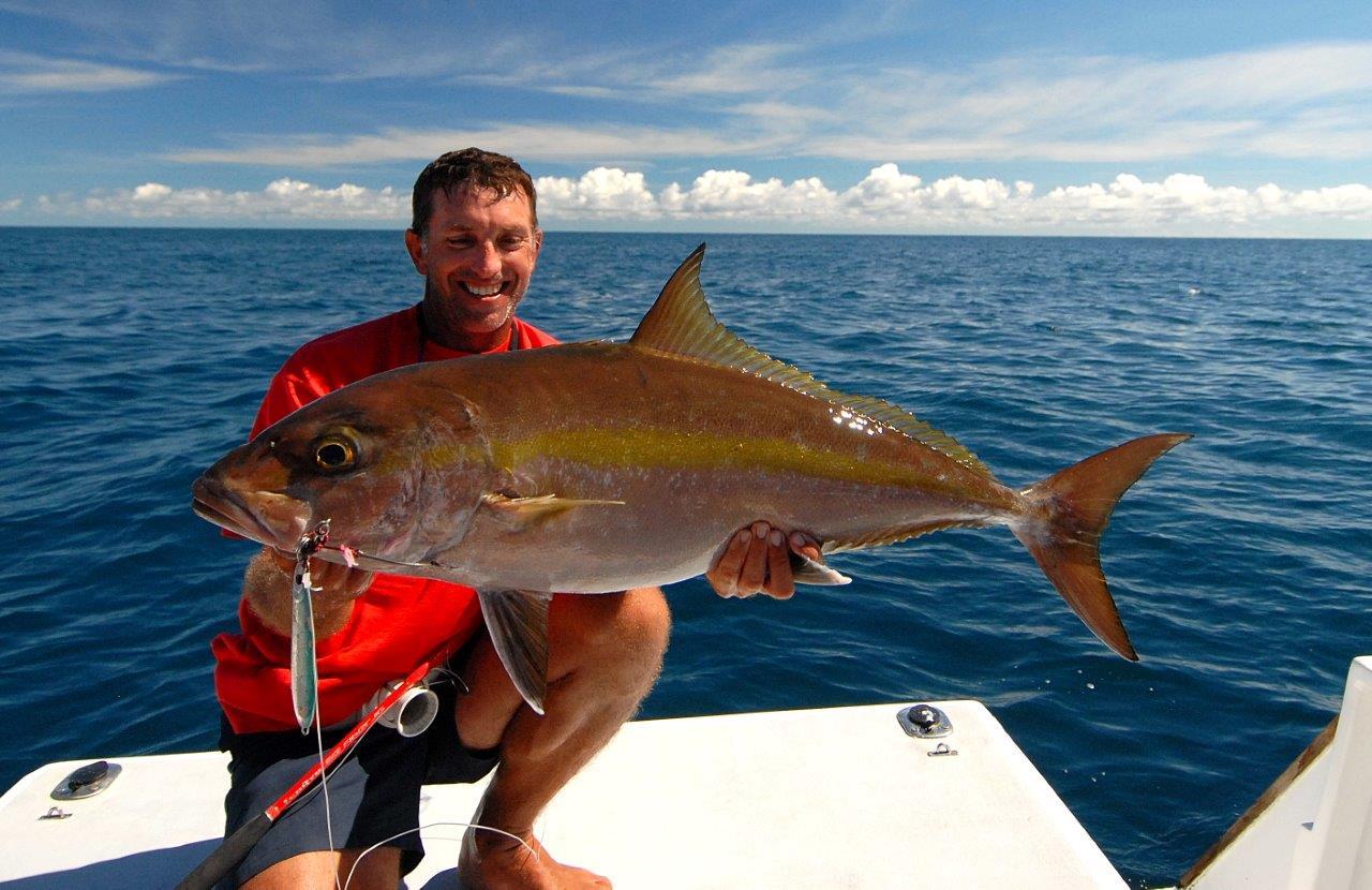 La sériole est un poisson largement répandu sur les mers du globe