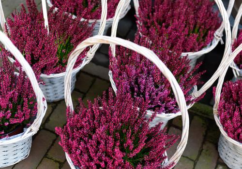 Quali fiori e piante regalare in autunno