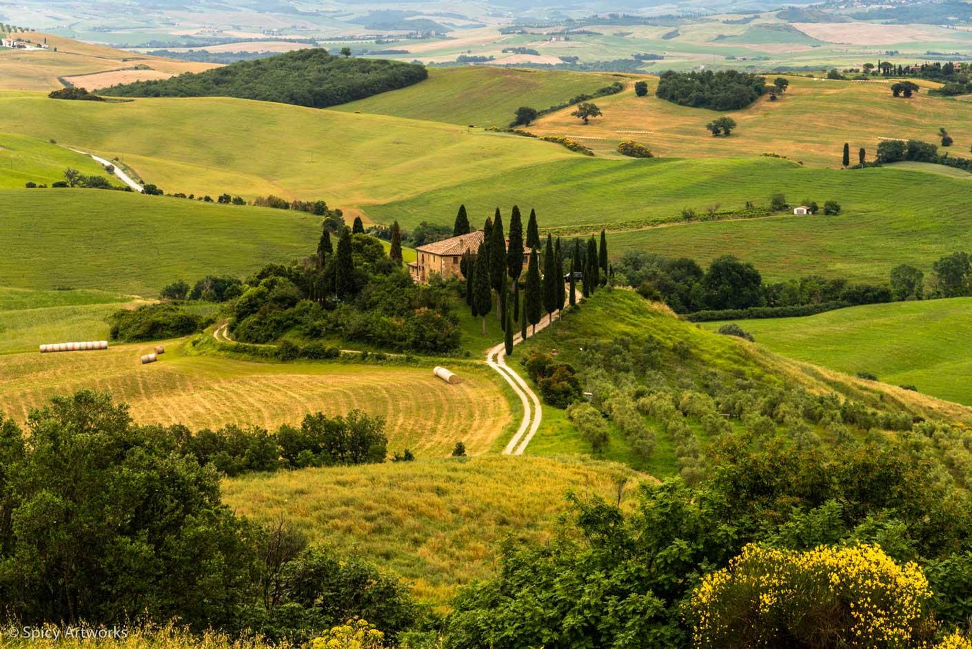 Olivenbäume in der Toskana