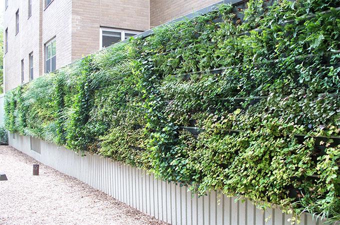 quelles plantes prendre pour un mur v g tal. Black Bedroom Furniture Sets. Home Design Ideas