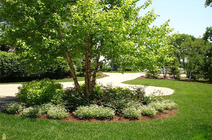 Connaitre tous les crit res de s lection pour bien choisir for Arbre pour jardin moderne