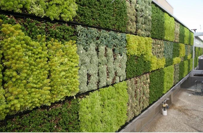 Tout ce que vous devez savoir sur un mur v g tal for Mur vegetal exterieur quelles plantes