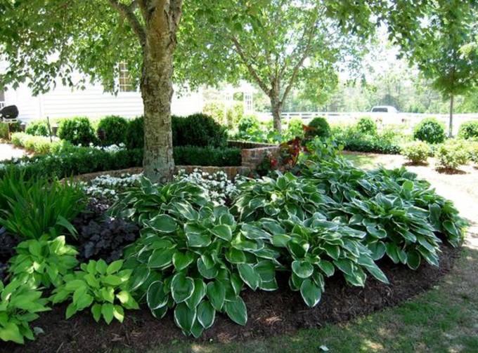 Nos conseils pour choisir les plantes et arbustes pour votre jardin
