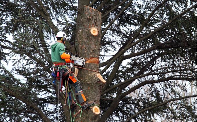 Qu 39 est ce que la profession d 39 lagueur grimpeur for Prix de l elagage d un arbre