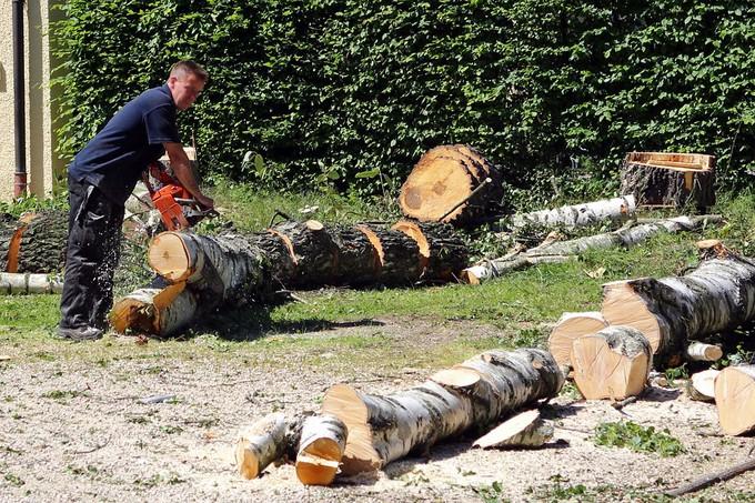 Connaitre le tarif pour faire abattre un arbre par un for Tarif tonte gazon par paysagiste