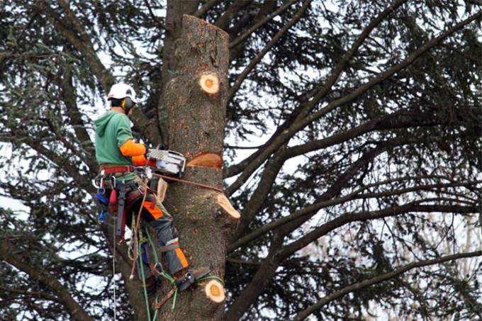 L 39 abattage et l 39 lagage d arbres lebonpaysagiste for Prix de l elagage d un arbre