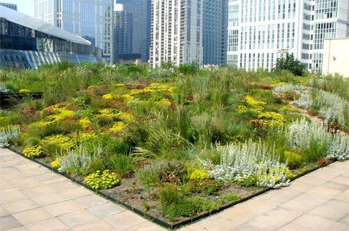 tout savoir propos des plantes utilis es sur les toits v g taux. Black Bedroom Furniture Sets. Home Design Ideas