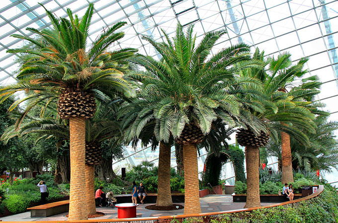 sortes de palmiers sjnp28 toutes sortes de palmiers personnalis fabrication palm trees toutes. Black Bedroom Furniture Sets. Home Design Ideas