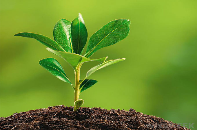 Jardin quand et comment planter for Le jardin quand planter