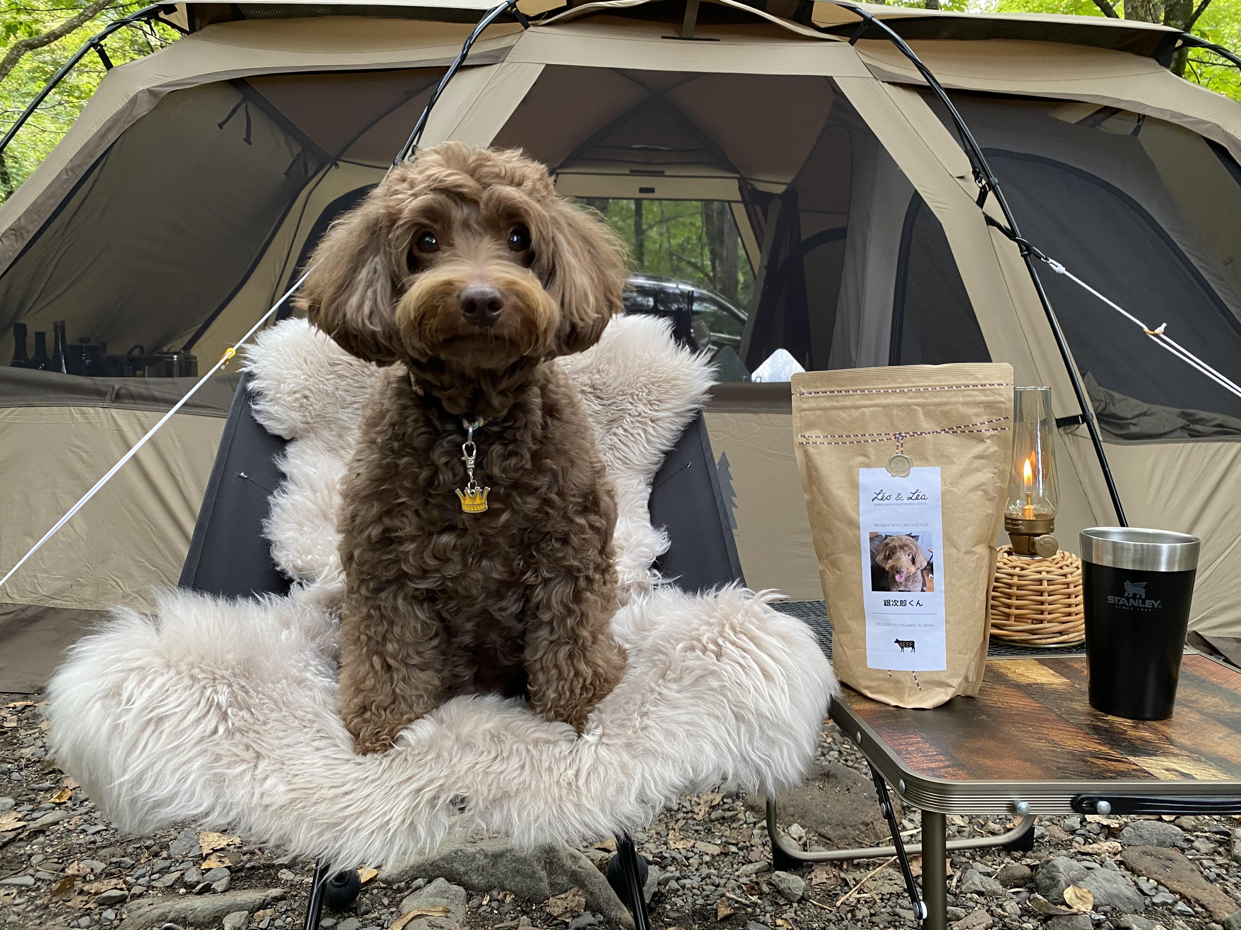 レオアンドレアと銀次郎くん。キャンプ中にパシャリ^^「レオアンドレアは、キャンプに持って行くのにちょうどいい量で銀も喜んでおりました!」by 田中さん