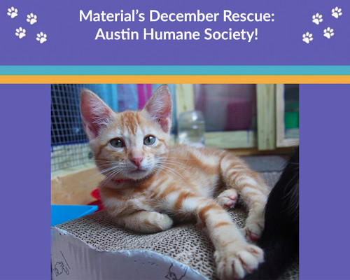 Meet Our December Animal Rescue: Austin Humane Society!