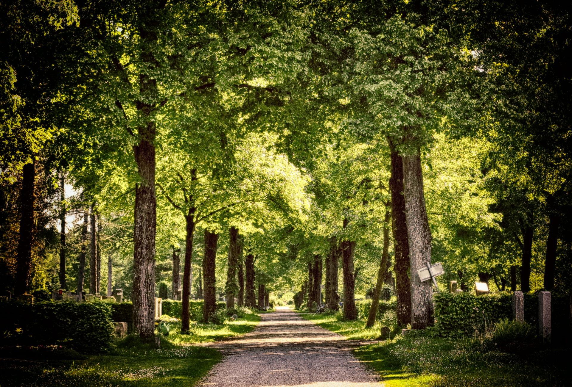 Planter un arbre à la mémoire du disparu