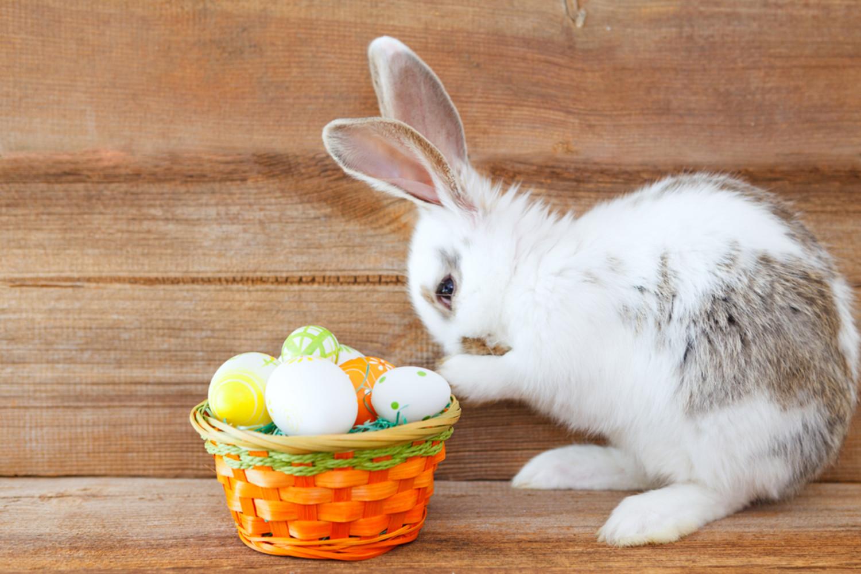 easter egg hunt netmums