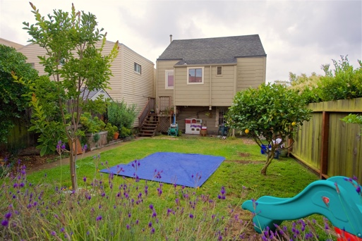 The grassy back yard, with lemon trees and flowers
