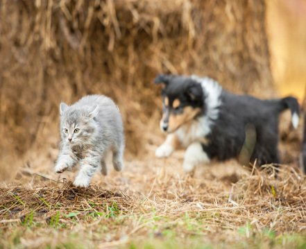 pet-sitting--options