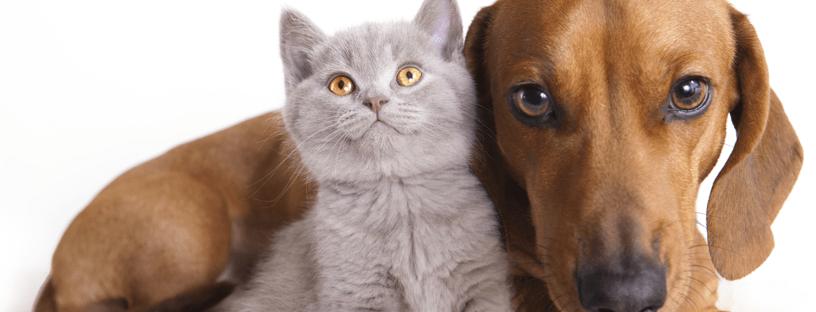 chat-et-chien-beaux-yeux