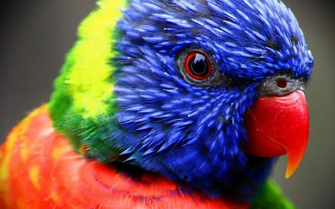 Int�gration de Parrot
