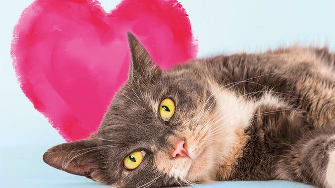 1d7eaabbe7fba22ea0da1ff402337e777495e7e3 feline lonely image