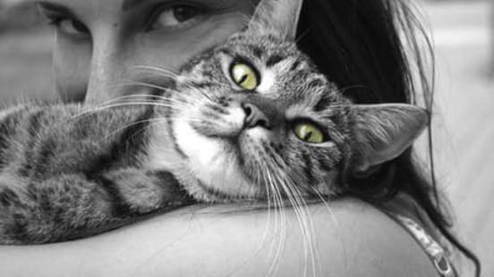 A8246710d7fdd85b79514d29b36223e13e250394 cat hug