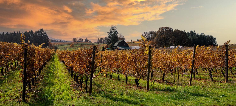 Photo of Newberg Wine Country