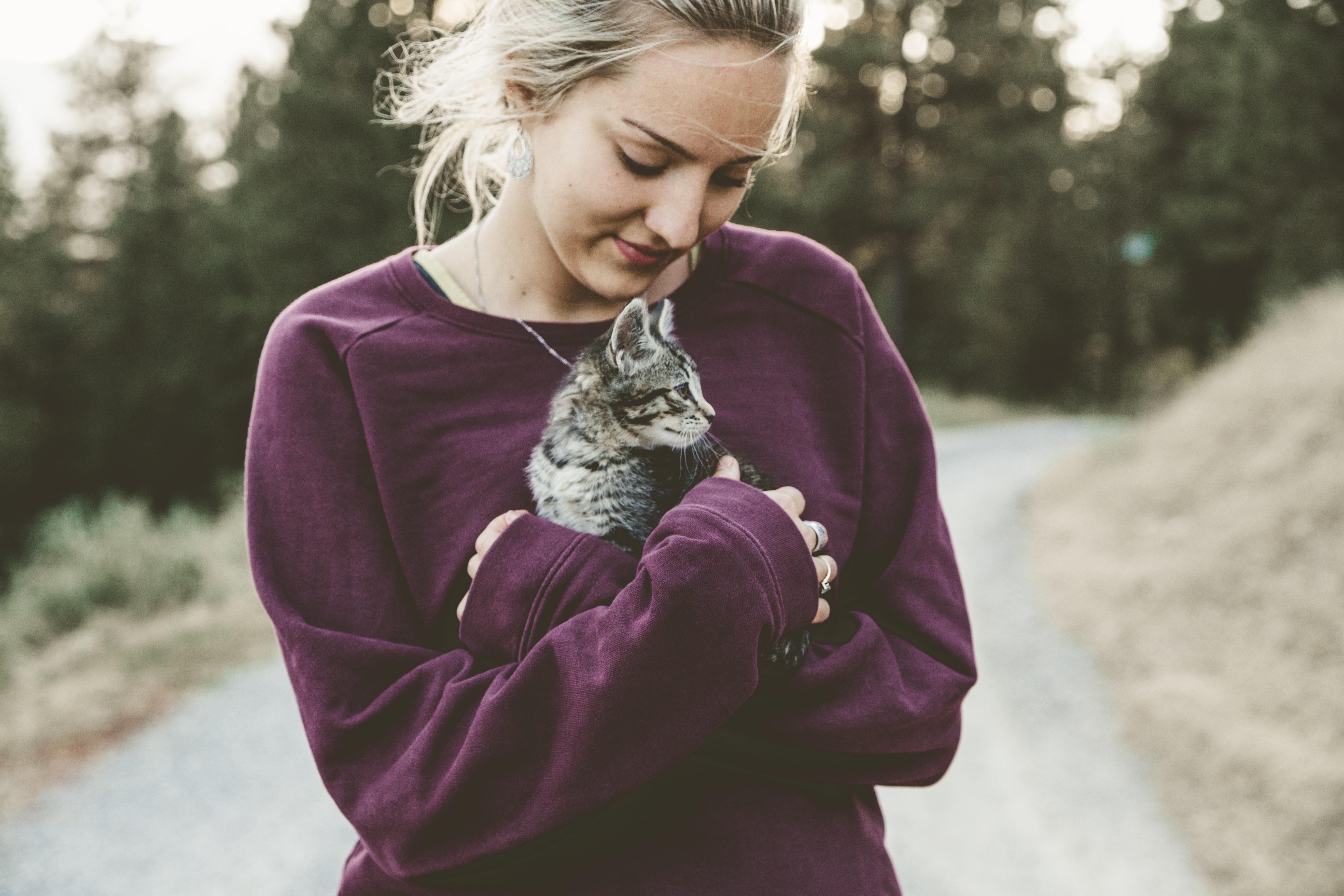shooting photo animalier, photographe animalier, photo chat