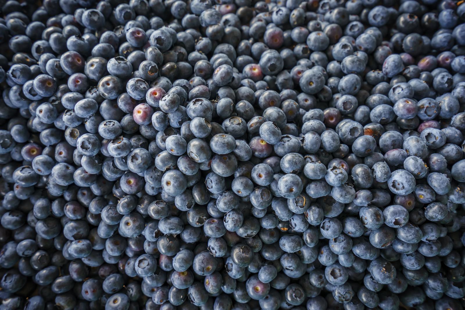 Bog bilberries