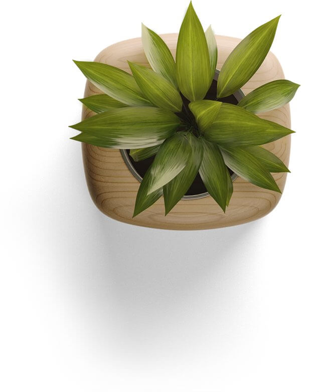 top-down view of a potted plan
